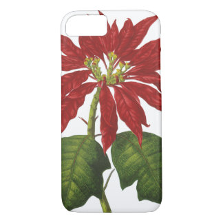 Vintage Christmas, Red Poinsettia Winter Plant iPhone 7 Case