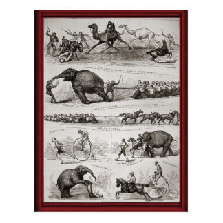 Vintage Circus animals and penny farthings Postcard