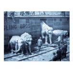 Vintage Circus Elephants Ringling Railroad Car Postcard