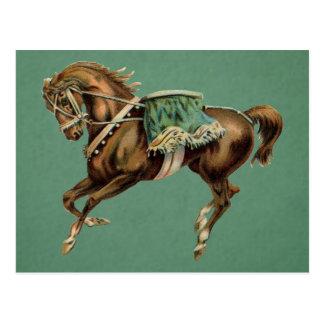 vintage circus horse postcard