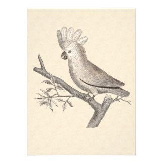 Vintage Cockatoo Parrot Personalized Announcement
