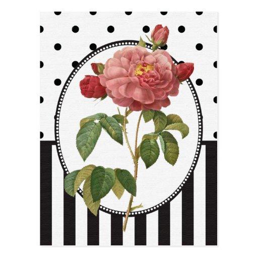 Vintage Collage Pink Rose Botanical Print Post Card