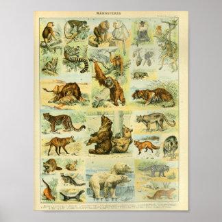 Vintage Color Wildlife Mammals Print