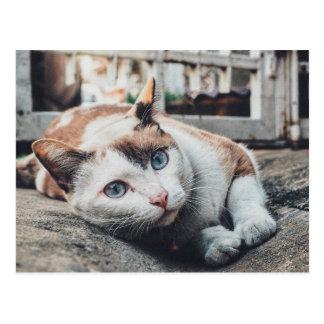 Vintage Colors Cat Postcard