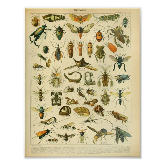 Vintage Colour Insect Art Print