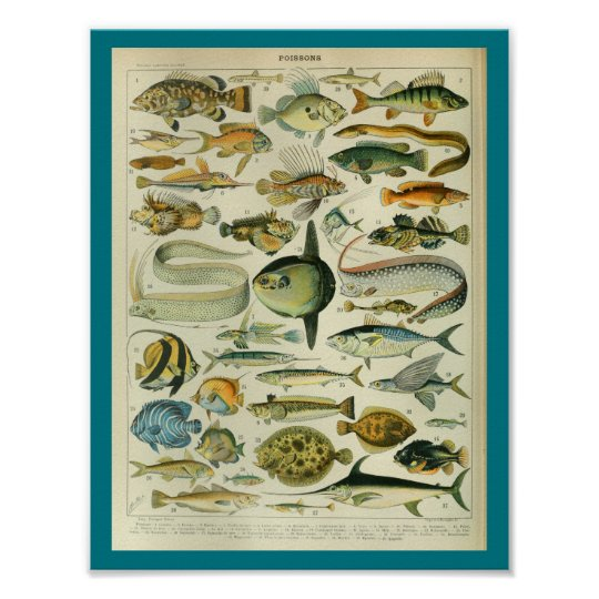 Vintage Colour Sealife Fish Print