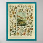 Vintage Colour Sealife Shells Print