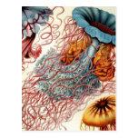 Vintage Colourful Jellyfish