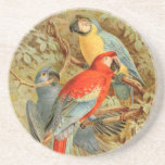 Vintage Colourful Macaws