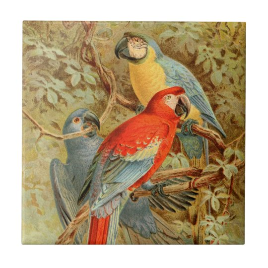 Vintage Colourful Macaws Small Square Tile