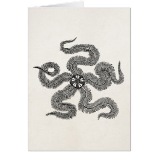 Vintage Common Brittle Star Personalized Template Card