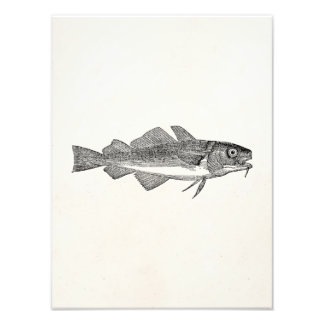 Vintage Common Cod Fish - Aquatic Fishes Template Photograph
