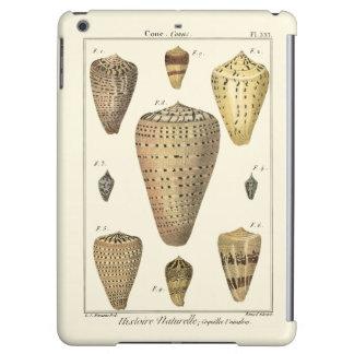 Vintage Cone Shells