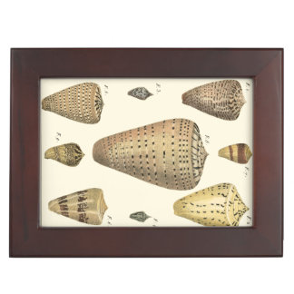 Vintage Cone Shells Memory Boxes