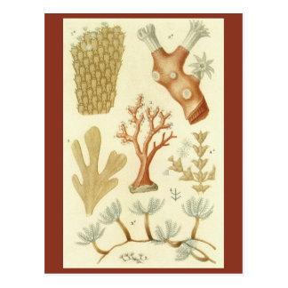 Vintage Coral Animals, Science Textbook Biology Postcard