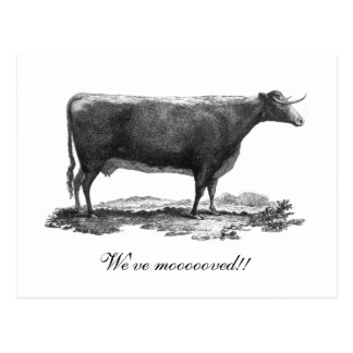 Vintage cow change of address card postcard