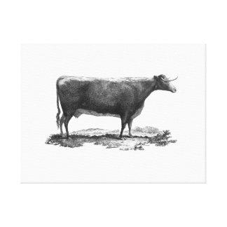 Vintage cow etching canvas print