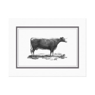Vintage cow etching canvas print with borders
