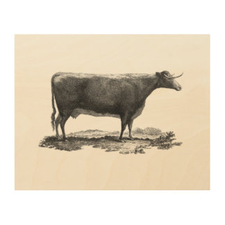 Vintage cow etching print