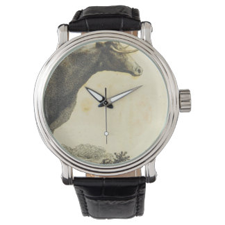 Vintage cow etching watch