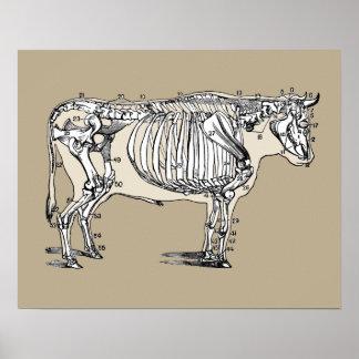 Vintage Cow Skeleton Poster