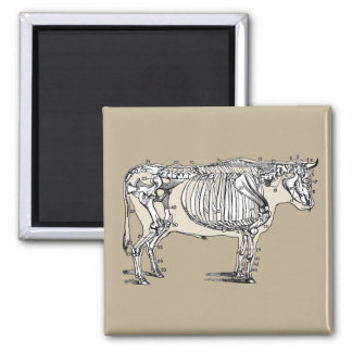 Vintage Cow Skeleton Square Magnet