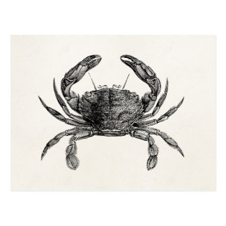 Vintage Crab Antique Crabs Personalized Template Postcard