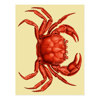 Vintage Crab Design Postcard