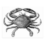 Vintage Crab Drawing Post Cards
