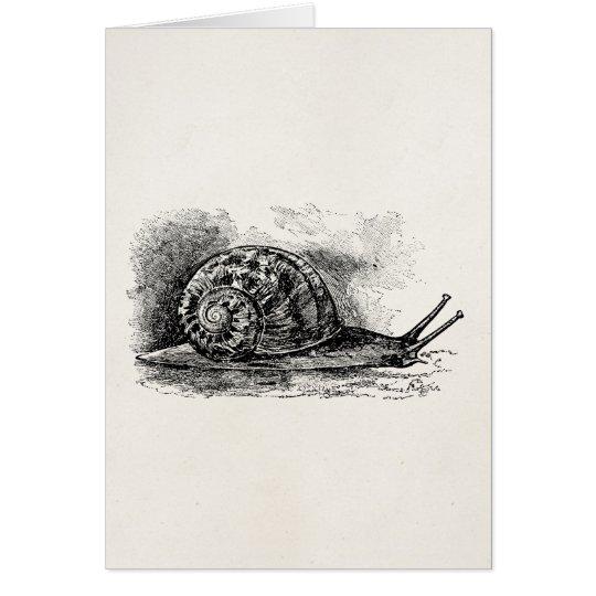 Vintage Crawling Snail Antique Template