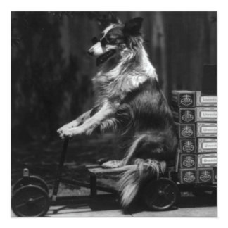 Vintage Crazy Dog Riding Wagon Photo 13 Cm X 13 Cm Square Invitation Card
