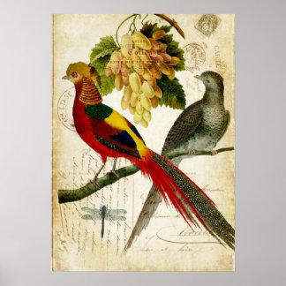 Vintage Crested Birds on Handwritten Carte Postale Poster