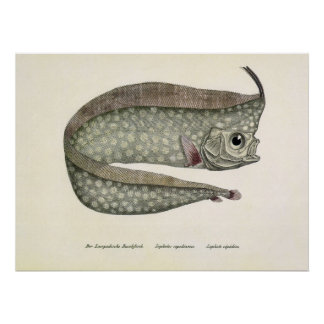 Vintage Crested Oarfish Fish, Marine Aquatic Life Poster