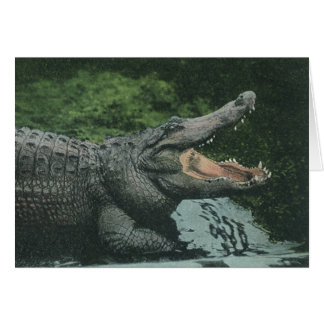 Vintage Crocodile Marine Animal Life Reptile Greeting Cards