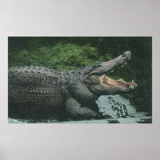 Vintage Crocodile Reptiles, Marine Animal Life Poster