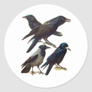 Vintage Crow and Raven Collage, Black Birds Classic Round Sticker