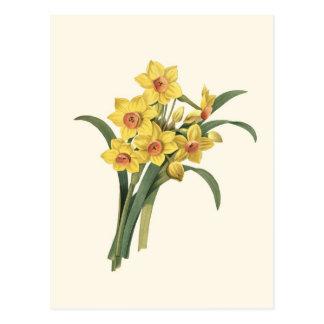 Vintage Daffodils Postcard