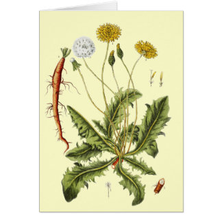 Vintage Dandelion Illustration Card