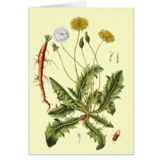 Vintage Dandelion Illustration Greeting Card