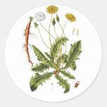 Vintage Dandelion Illustration Round Stickers