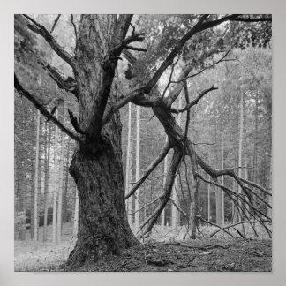 Vintage Dead Tree Poster