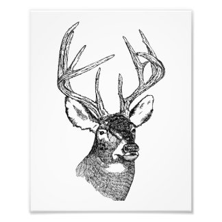 Vintage deer art graphic photo print