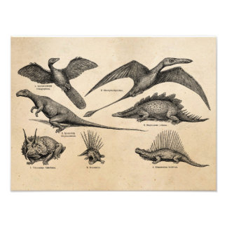 Vintage Dinosaur Illustration Retro Dinosaurs Photo Print