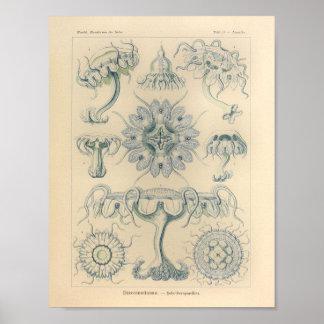 Vintage Discomedusae Color Ernst Haeckel Print