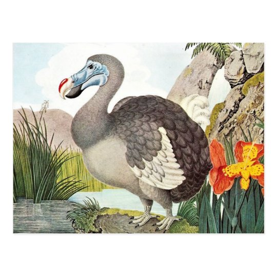 Vintage Dodo Bird Art Postcard