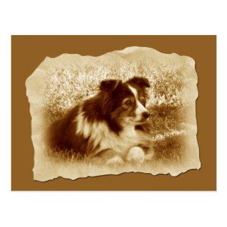 Vintage Dog in Sepia Tones Postcards