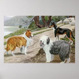 Vintage Dog Lovers Art Collie Trio Poster