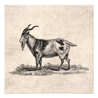 Vintage Domestic Goat Illustration -1800 s Goats Announcement