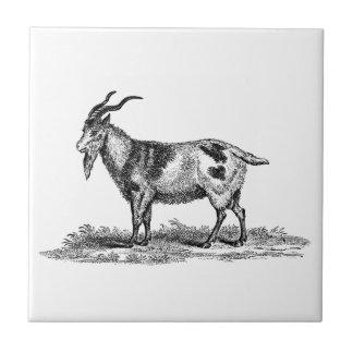 Vintage Domestic Goat Illustration -1800 s Goats Ceramic Tile