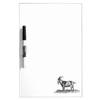 Vintage Domestic Goat Illustration -1800's Goats Dry Erase Whiteboard